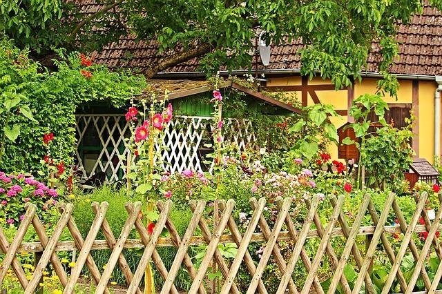 cottage garden plants sun