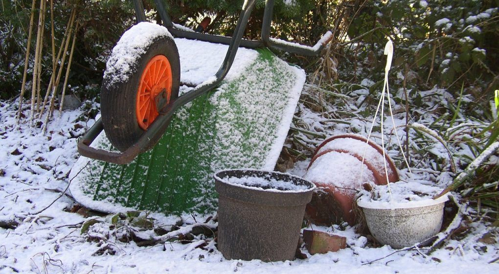 tips for the winter lawn