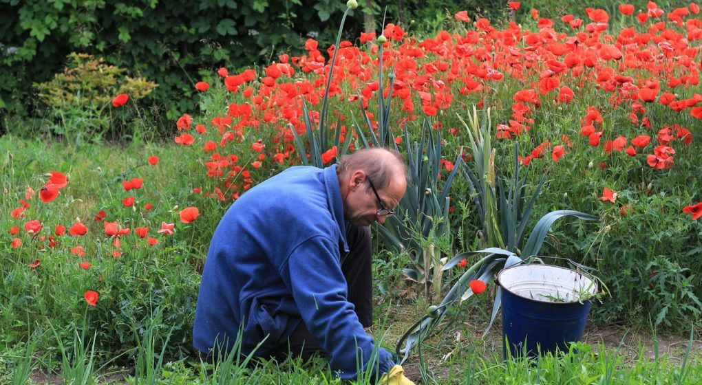 weeding your garden