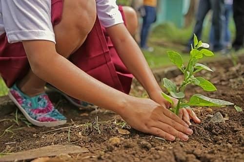 organic garden beginners