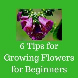 flower growing tips for beginners