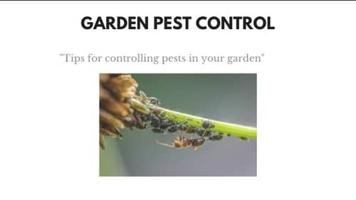 control pests in your garden