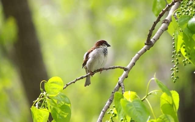 bird in organic garden