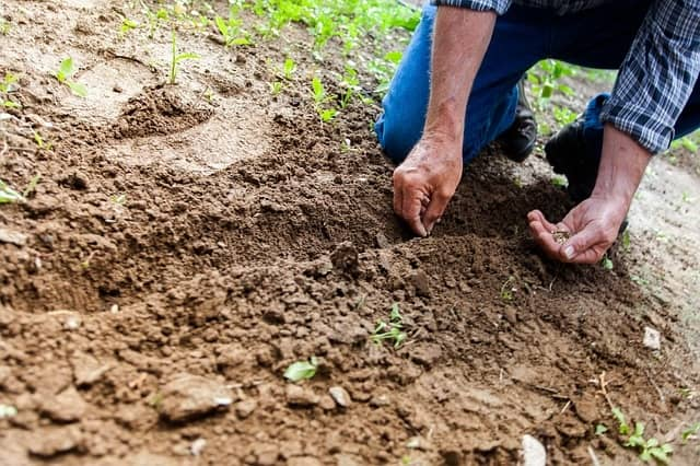 soil types for vegetable gardens