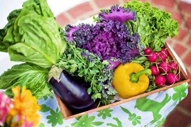 how to grow vegetables for beginners