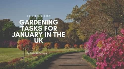 january gardens UK