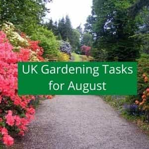 gardening jobs to do in august
