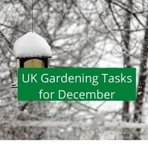 gardening jobs to do in December