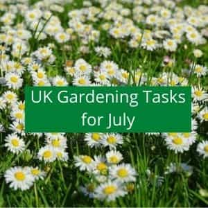 gardening jobs to do in july