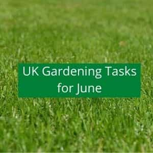 gardening jobs to do in june