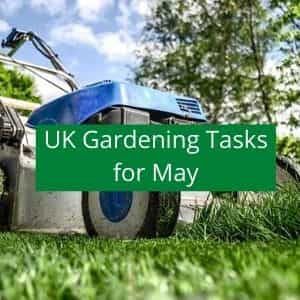 gardening jobs to do in May