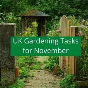 gardening jobs to do in November