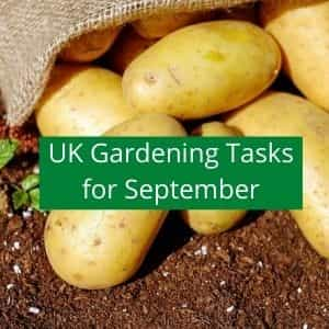 gardening jobs to do in September