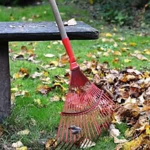 the garden rake