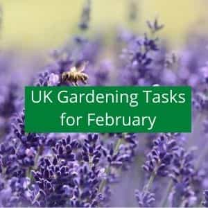 gardening jobs to do in february