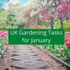 gardening jobs to do in january