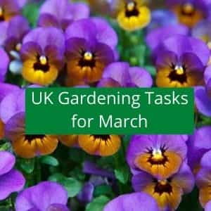 gardening jobs to do in march