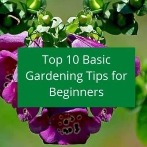 Top 10 Uk Gardening Tips For Beginners Getting Started