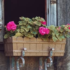 container garden for flowers